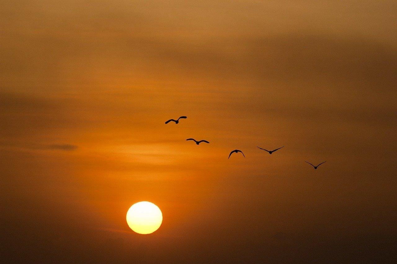 sunset, sea, sun